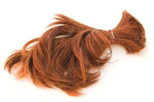 cut hair. gerbera free.stockxchng