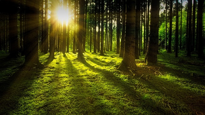 sun casting long shadows on green earth through a forest of mature trees